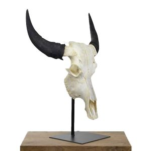 Indian Cow Skull
