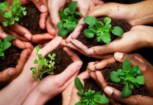 Eco Friendly plant